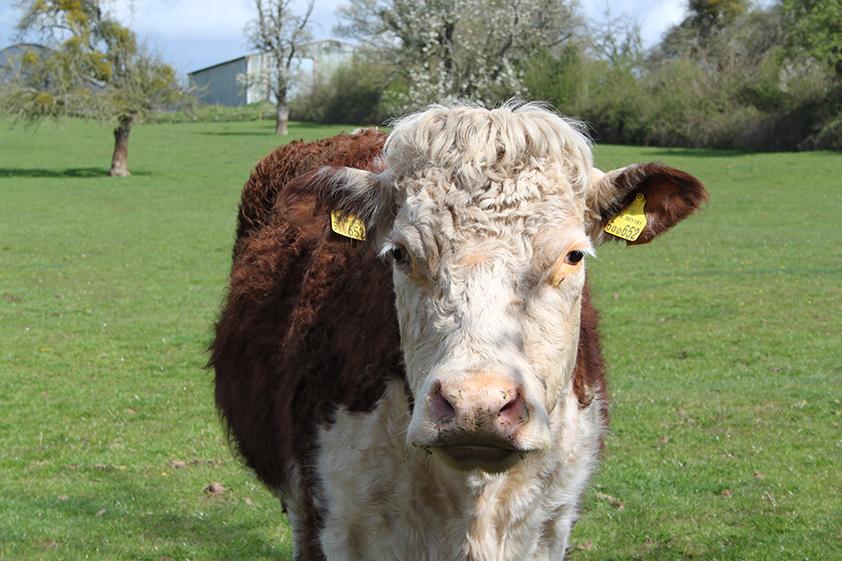 CRT Awnells Farm